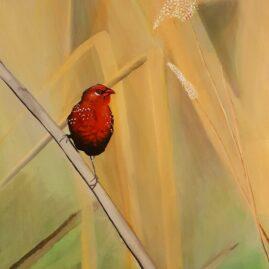 Songbird #2