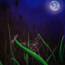 Spiderweb in moonlight